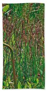 Northern Pitcher Plant In French Mountain Bog On Cape Breton Isl Beach Towel