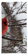 Northern Red Cardinal In Winter Beach Towel