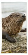 Northern River Otter Beach Towel