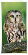 Northern Saw-whet Owl Aegolius Acadicus Wildlife Rescue Beach Towel