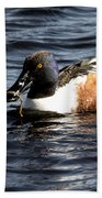 Northern Shoveler Beach Towel