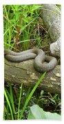 Northern Water Snake - Nerodia Sipedon Beach Towel