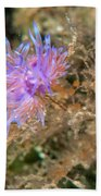 Nudibranch 2 Beach Towel