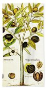 Nutmeg Plant Botanical Beach Towel