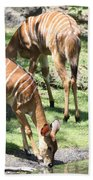 Nyalas At The Watering Hole Beach Towel
