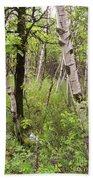 Oak And Birch Beach Sheet