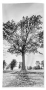 Oak Tree Bw Beach Towel