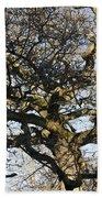 Oak Tree In Winter Beach Towel