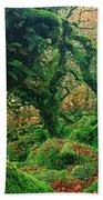 Oak Trees In A Forest, Wistmans Wood Beach Towel