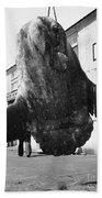 Ocean Sunfish Mola Mola  Monterey 1946 Beach Towel