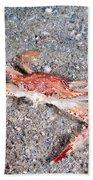 Ocellate Swimming Crab Beach Towel