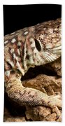 Ocellated Lizard Timon Lepidus Beach Towel