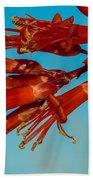Ocotillo Flowers Beach Towel by Robert Bales