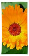 October's Summer Sunlit Marigold  Beach Towel