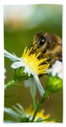 Of Bee And Flower Beach Towel