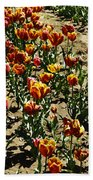 Oil Painting - Red And Yellow Tulips Inside The Tulip Garden In Srinagar Beach Towel