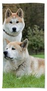 Old And Young Akita Inu Beach Towel