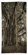 Old Banyan Tree Beach Towel by Adam Romanowicz