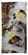 Old Fallen Birch Beach Towel