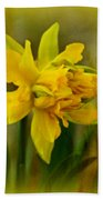 Old Fashioned Daffodil Beach Towel