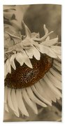 Old Fashioned Sunflower Beach Towel