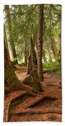 Old Growth Cedar At Cheakamus Lake Beach Towel
