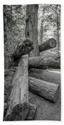 Old Growth Forest Black And White Collection 4 Beach Towel