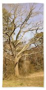 Old Haunted Tree Beach Towel