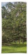 Old Oak Tree Beach Towel