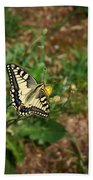 Old World Swallowtail. Montorfano. Cologne Beach Towel