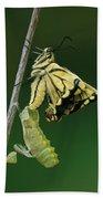 Oldworld Swallowtail Emerging Beach Towel