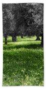 Olive Grove Italy Cbw Beach Towel