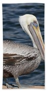 On The Edge - Brown Pelican Beach Towel