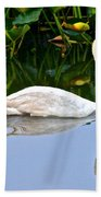 On The Swanny River Beach Towel