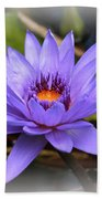 One Purple Water Lily With Vignette Beach Towel