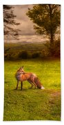 One Red Fox Beach Towel by Bob Orsillo