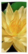 One Water Lily  Beach Towel