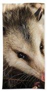 Opossum Beach Sheet