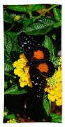 Orange And Black Butterfly Beach Towel