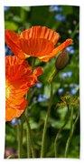 Orange And Blue - Beautiful Spring Orange Poppy Flowers In Bloom. Beach Towel