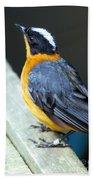 Orange Breasted Bird Portrait Beach Towel