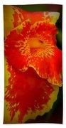 Orange Delight Beach Towel by Debra Forand