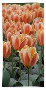 Orange Dutch Tulips Beach Sheet
