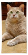 Orange Tabby Cat Beach Towel