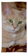 Orange Tabby Cat Poses Royally Beach Towel