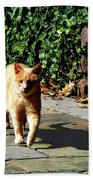 Orange Tabby Taking A Walk Beach Towel