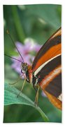Orange Tiger Or Banded Orange Butterfly Beach Towel