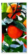 Orange Tree In Springtime  Beach Towel