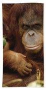 Orangutan Mother And Baby Beach Towel