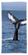 Orca Bitemarks On Humpback Tail Beach Towel